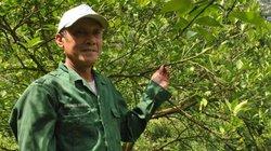 """Người trồng """"trái vàng"""" VietGAP trên đất Thượng Bằng La"""