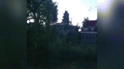 Đội quân muỗi khổng lồ càn quét gia súc ở Nga, nhiều người lo tận thế