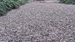 Học tập Nhật Bản, tận dụng xỉ than làm gạch lát đường