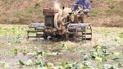 Bộ trưởng Trần Tuấn Anh: Trung Quốc không còn dễ tính với nôngsản Việt