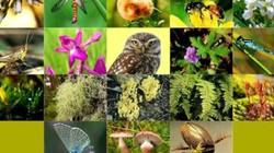 Nhiều hoạt động hưởng ứng Ngày quốc tế đa dạng sinh học 22.5.2018