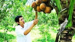 Thu 15 triệu/tháng từ trồng dừa xiêm lửa xen cam xoàn trên đất cằn