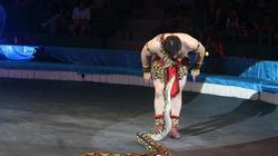 Cấm sử dụng động vật hoang dã trong biểu diễn xiếc được không?