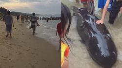 Cá Ông trôi dạt vào bờ biển Quảng Ngãi