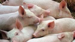 Giá heo hơi hôm nay 29/5: Bộ Nông nghiệp công bố số liệu giá lợn hơi tháng 5