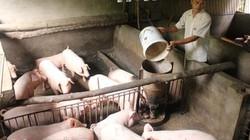 Phó Cục trưởng Chăn nuôi trả lời về nghi vấn C.P thao túng giá lợn