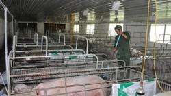 """Nông dân nuôi lợn bị """"đá"""" ra rìa: Chính sách điều hành kiểu gì?"""