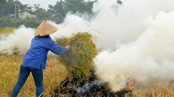 """Bán chẳng ai mua, dân xứ Nghệ mang """"sợi vàng"""" ra đốt"""