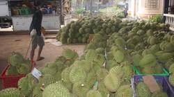 Mùa trái cây Đồng Nai, kẻ lo sốt vó, người thu tiền tỷ