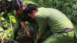 Quảng Ninh: Phát hiện hộ dân trồng cây nghi là cần sa trong vườn nhà