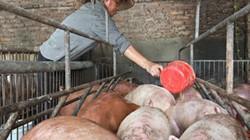 """Tan nát ngành chăn nuôi lợn: 1-2 năm nữa, công ty FDI sẽ """"hốt trọn"""""""