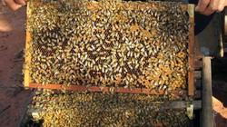 Nhận biết mật ong chất lượng bằng cọng hành tươi chỉ sau 5 phút
