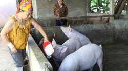 Giá heo (lợn) hơi hôm nay 2/6: Nhiều nơi vượt mốc 52.000 đồng/kg, bao giờ giá lợn ngừng tăng?