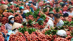 Nông dân điêu đứng với tin đồn thất thiệt về giá nông sản