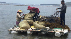 Tổ tự quản - cánh chim tiền tiêu bảo vệ tài nguyên môi trường biển