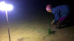 Nghệ An: Trốn nóng 38 độ, cả xã thắp đèn điện cấy lúa xuyên đêm