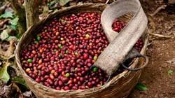 Giá nông sản hôm nay 4/6: Giá cà phê chưa có dấu hiệu  tăng lên, giá tiêu Việt rẻ nhất thế giới