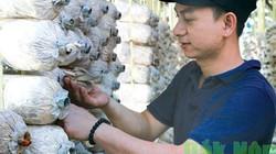 Đắk Nông: Khởi nghiệp trồng nấm bào ngư doanh thu 1 tỷ đồng