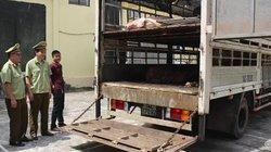 Quảng Ninh: Bắt giữ xe nhập lậu 13 con lợn thịt từ khu vực biên giới
