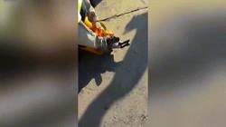 Video: Bắt trăn khổng lồ nôn ra thú cưng ăn trộm ở Nam Phi