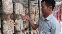 Trai trẻ bỏ việc về quê trồng nấm sò kiếm hàng trăm triệu đồng mỗi năm