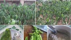 Kỳ lạ món canh xương rồng trong bữa cơm của người dân Bình Định