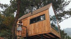 Trải nghiệm ngủ nhà gỗ giữa rừng thông cách Hà Nội nửa giờ chạy xe