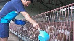 Giá heo hơi hôm nay 12/6: Lợn hơi giữ giá mức cao, bất chấp nghi ngờ