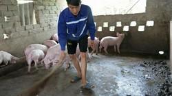 Giá heo hôm nay 14/6: Giá lợn hơi chững lại, người nuôi vẫn có lãi