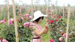 """Thuê đất bỏ hoang trồng 20.000 gốc hồng ngoại chỉ để """"nấu"""" nước"""