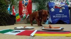 Clip: Chó 'tiên tri' dự đoán trận Đức vs Mexico