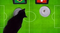 Clip: 'Tiên tri' mèo đen cass dự đoán Brazil đả bại Thụy Sĩ
