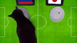 Clip: 'Tiên tri' mèo Cass dự đoán Nhật Bản gục ngã trước Colombia