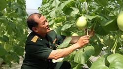 """Cựu binh già say mê làm nông nghiệp công nghệ cao """"như điếu đổ"""""""