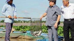 Chủ tịch Hội NDVN thăm xã nuôi 20.000 tấn cá, bán 24.000 tấn trái cây
