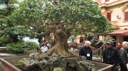 Hàng trăm cây cảnh quý hiếm giá hàng chục triệu USD của đại gia đất Tổ