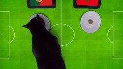 """Clip: """"Tiên tri"""" mèo Cass dự đoán Bồ Đào Nha hạ Ma-rốc"""