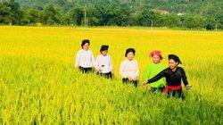 Chợt nhớ đồng quê: Mùa vàng ở Nghĩa Đô