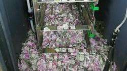 """""""Xót ruột"""" cảnh 400 triệu đồng trong máy ATM bị chuột nhai nát"""