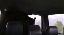 """Video: Gấu bị bắn chết bỗng """"sống lại"""" khiến thợ săn hãi hùng"""