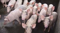 """Giá heo hơi hôm nay 25/6: Lợn hơi miền Bắc lên 1-2 giá, trứng gia cầm cũng tăng """"nóng"""""""