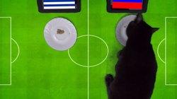 """Clip: """"Tiên tri"""" mèo Cass dự đoán khiến Uruguay bị sốc"""