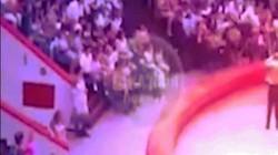 Đang biểu diễn, đà điểu lao khỏi sân khấu tấn công khán giả