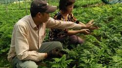 """Mỗi tháng """"đút túi"""" 35 triệu đồng nhờ trồng cây """"lá lạ"""""""