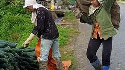 Lạng Sơn: Rơi nước mắt bán 1 tạ bí đao không mua nổi 2kg thịt lợn