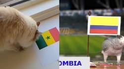 Tổng hợp dự đoán của các linh vật kết quả trận Colombia vs Senegal