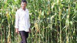 Nguy cơ phá sản ngành ngô Việt Nam vì giá thành cao ngất