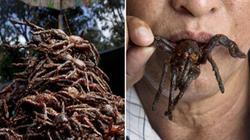 """""""Rùng mình"""" nhện độc chiên lại là món ăn vặt phổ biến ở Campuchia"""