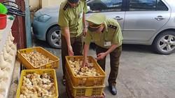 1.200 con gà nhập lậu bị tuồn vào nội địa bán kiếm lời