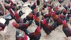 Bộ đội xuất ngũ về nuôi gà ri, trồng dưa mà thành tỷ phú